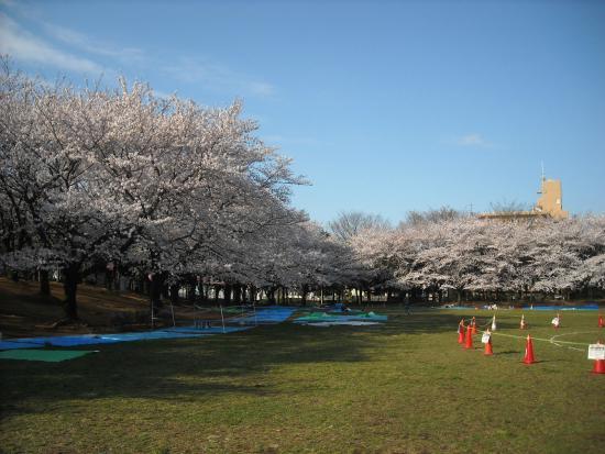 Warabi City Park