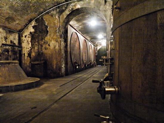 Castello di Lispida: Impressive wine cellars