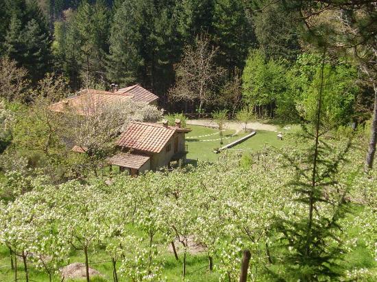 Casale Camalda - Organic Farm: panoramica