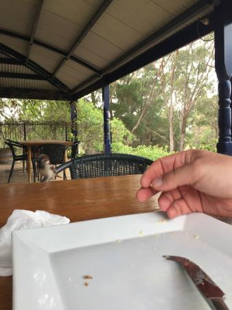 Avoca, Australia: verandah at pyrenees. sparrows don't need much encouragement.