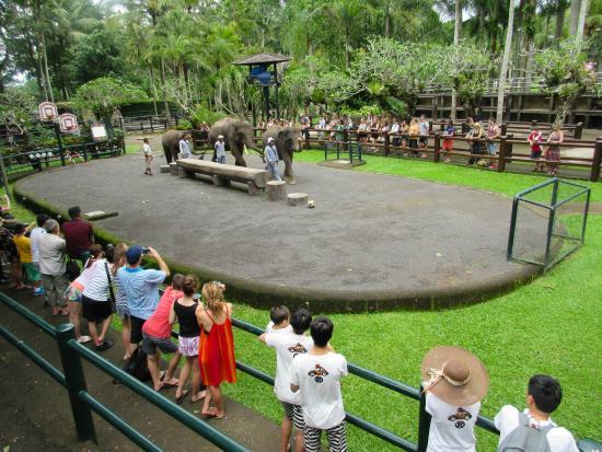 Elephant Safari Park & Lodge : Elephant Talent Shows three times daily