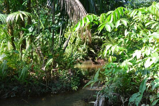 Grundstück Pousada Manaus