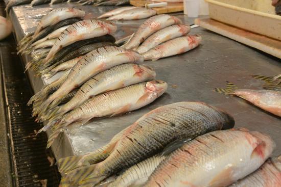 Pousada Manaus: Fischmarkt