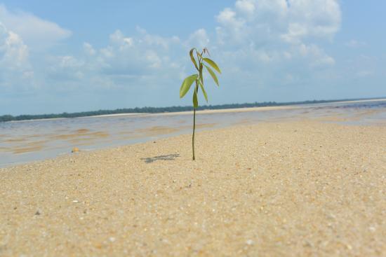 Pousada Manaus: Sandbank