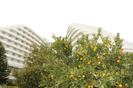 Miracle Resort Hotel: otelin dis görünüsü