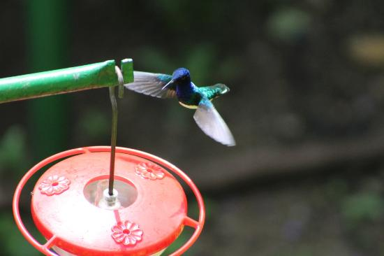 Asa Wright Nature Center Reviews