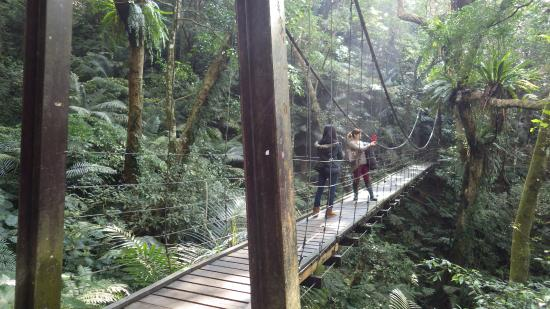 Great Roots Forestry Spa Resort: Rainforest Walk