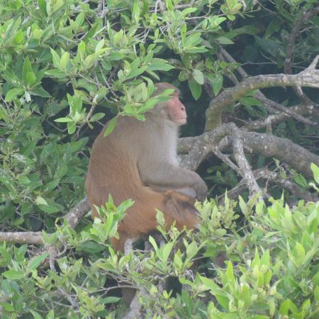 Barefoot Travelers Kayak Tour to Monkey Island : Monkey contemplating the meaning of life