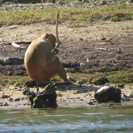 Barefoot Travelers Kayak Tour to Monkey Island : Hanging out on the beach