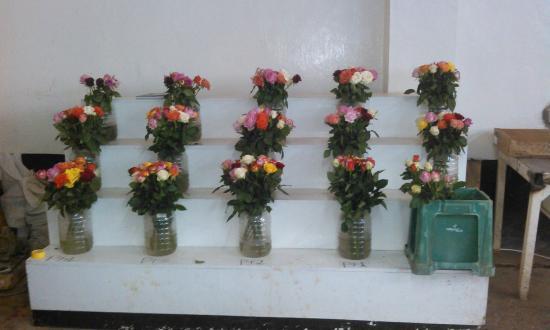 Bilashaka Lodge: Rose Farm Tour