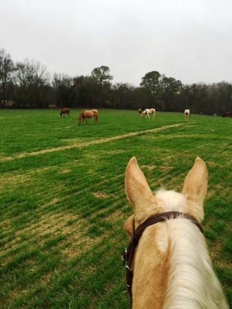 Southern Cross Ranch: Horses everywhere