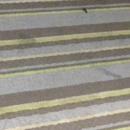 Super 8 Jamaica North Conduit: Carpet soiled