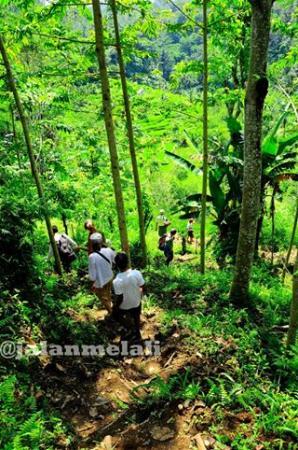Jalan Melali - Day Tours