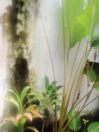 Maya Sayang: See the mould growing in the walls