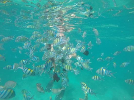 SweetDreamers Charters - Private Day Trips: Snorkling with masses of beautiful fish