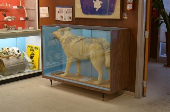 Eskimo Museum: lupo artico