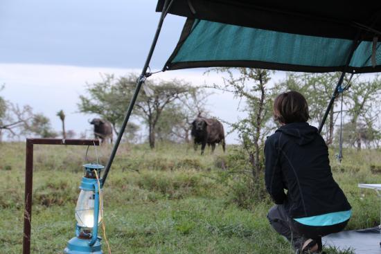 Serengeti Wildcamp: Good morning!