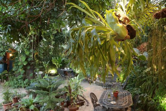 Ingresso principale della casa colonial el patio picture - Giardino tropicale ...