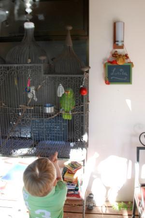 Tacacori EcoLodge : Lorita, the house parrot