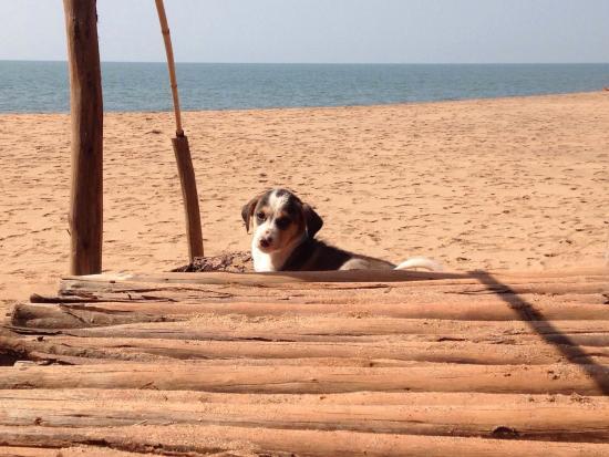 Dwarka Eco Beach Resort: Tequila!