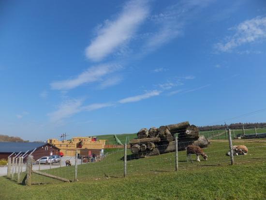 The CocoaBean Company: View of the animals and play fort from the car park