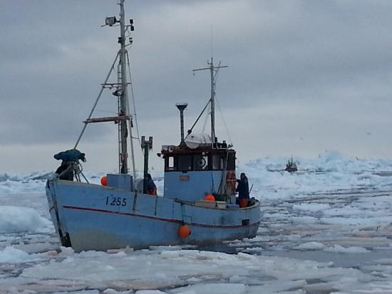 Greenland: uscita  dal porto di ilullisat