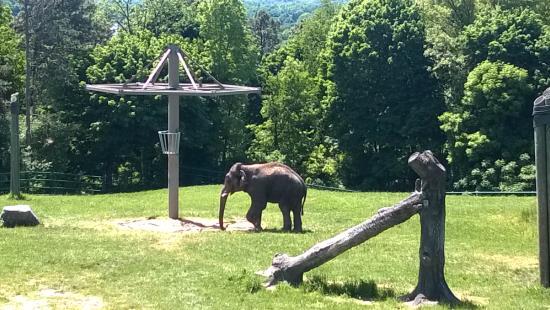 elephant exhibit picture of rosamond gifford zoo syracuse