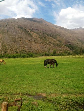 Horse Riding Chile: At the parcela