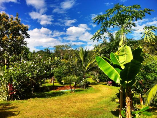 Tambor, Costa Rica: finca paraiso from the house