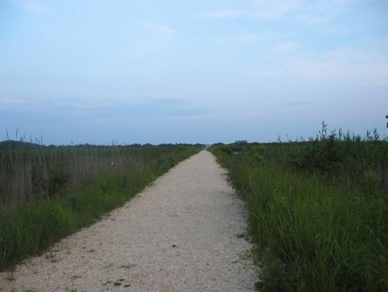 South Cape May Meadows: Main path