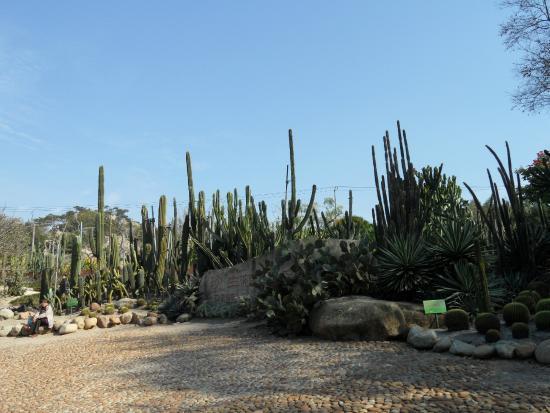 Xiamen Botanical Garden: cactus zone