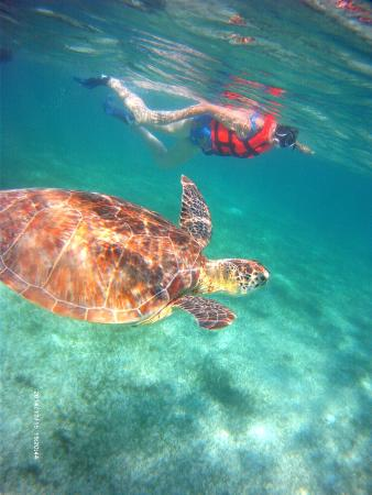 Akumal Dive Center: Swimming with the turtle!