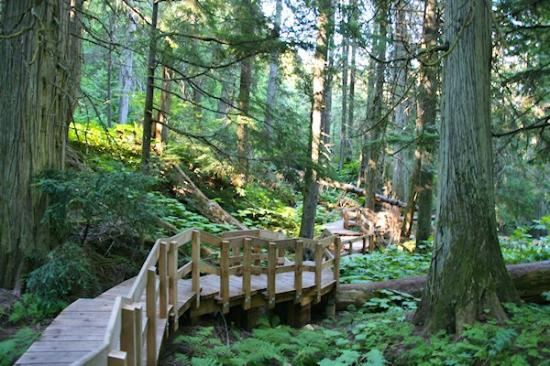 Giant Cedars Boardwalk Trail: The boardwalk