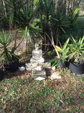 Rasayana Cove Ayurvedic Retreat: Statue of Buddha