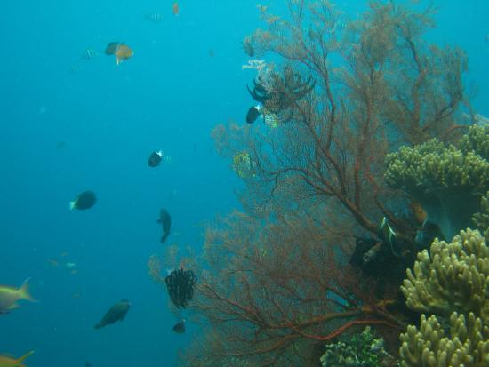 Bali Reef Divers: Site: Japanese shipwreck