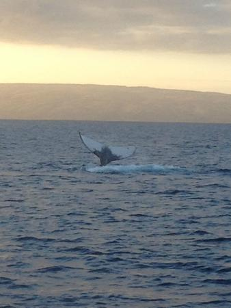 Molokai Fish & Dive Center: He flipped his tail to say hello. Beautiful
