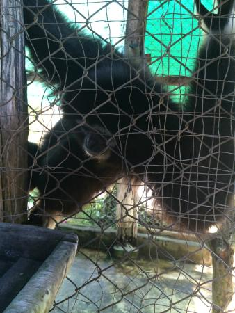 Chiang Mai Monkey Centre : inadequate cages