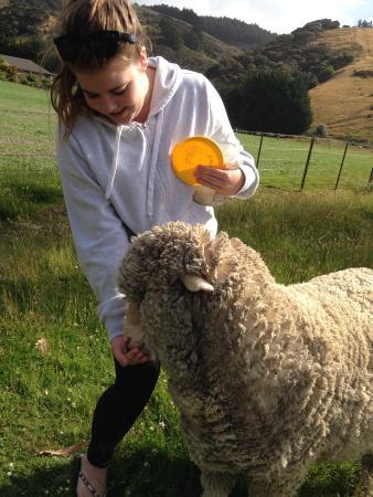 Silver Peaks Lodge: Lauren feeding Sam the sheep