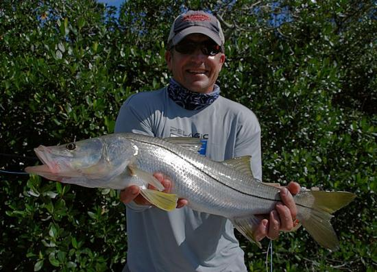 Fly fishing snook picture of everglades sight fishing for Everglades city fishing
