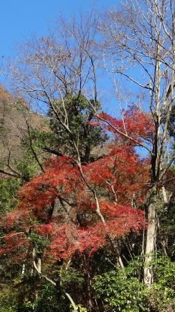 Shasui Falls: 12月ですが紅葉がのこっていました