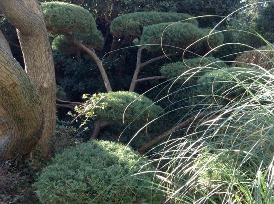 Restaurant L'Hibiscus: vivement le printemps afin de profiter de ce jardin impeccable