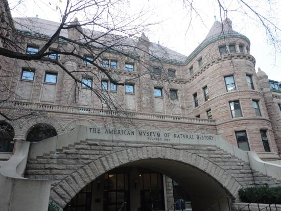 an observation of the american museum of natural history A career at the museum  to sequence mammalian genes at the american museum of natural history r  an accidental observation led to an interdisciplinary study.