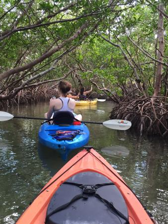 Sea Life Kayak Adventures: Gliding thru the mangrove tunnels!