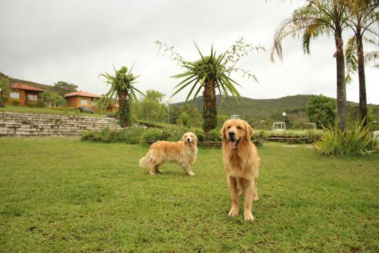 Carrancas, MG: Nalu e Ravi!! Cães guias que nos levam pelas trilhas da pousada!!