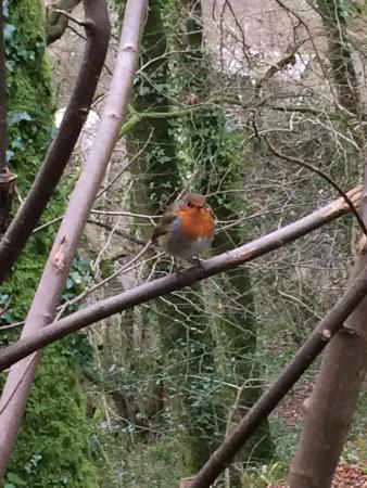 Carnglaze Caverns: Robin followed us all the way round
