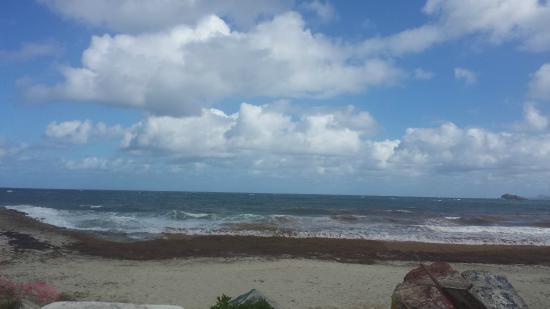 Simpson Bay, Saint-Martin / Sint Maarten: Guana Bay Beach (during kelp season)