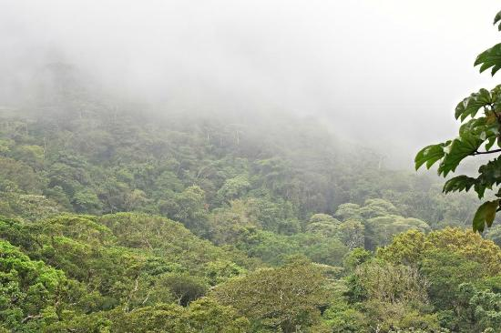 Gaital National Park: Misty cloud forest