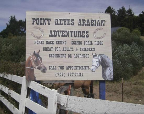 Point Reyes Arabian Adventures