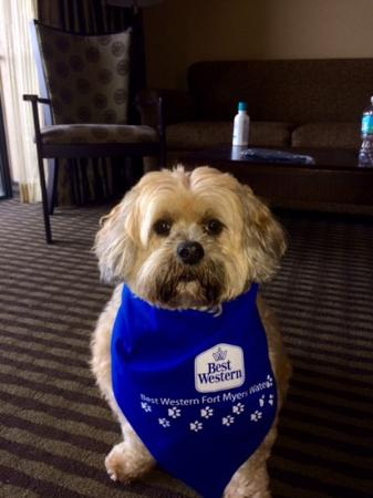Best Western Fort Myers Waterfront: our dog Lucky at the Best Western N Ft Myers
