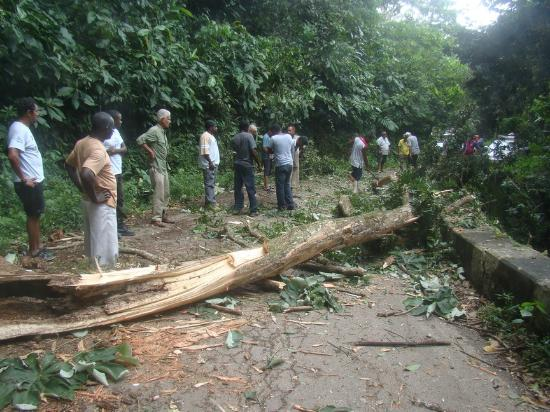 Asa Wright Nature Centre and Lodge: road to hotel blocked by tree, all joined to clear, free extra activity!